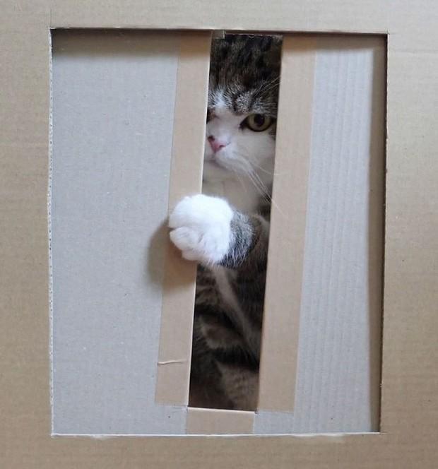 YouTuber bày trò lách khe cửa hẹp cho 2 boss, kiểm chứng xem mèo có làm từ... chất lỏng hay không - Ảnh 8.