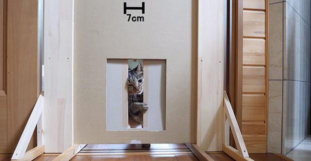 YouTuber bày trò lách khe cửa hẹp cho 2 boss, kiểm chứng xem mèo có làm từ... chất lỏng hay không - Ảnh 9.