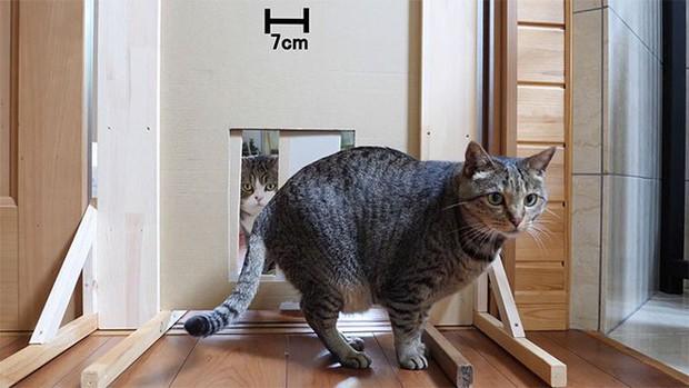 YouTuber bày trò lách khe cửa hẹp cho 2 boss, kiểm chứng xem mèo có làm từ... chất lỏng hay không - Ảnh 10.