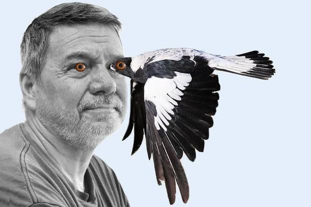 Lại là nước Úc kinh dị: Tài xế ở đây đang có nguy cơ phải bỏ mạng vì biệt đội Angry bird từ trên trời rơi xuống - Ảnh 2.