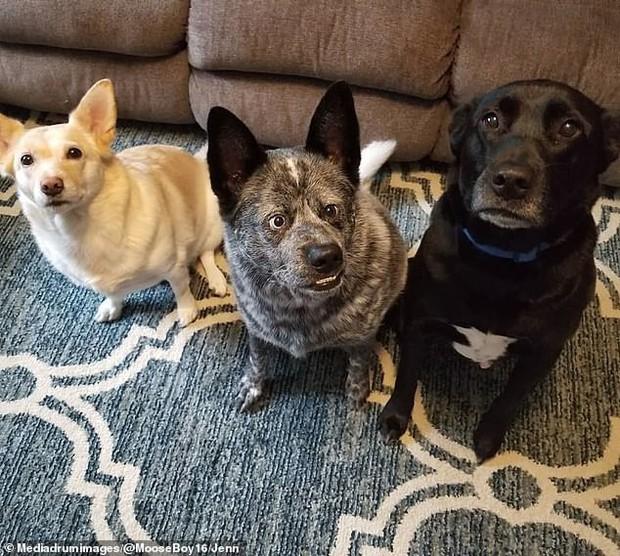 Câu chuyện cảm động đằng sau những bức ảnh đáng yêu của chú chó hạnh phúc nhất thế giới - Ảnh 3.