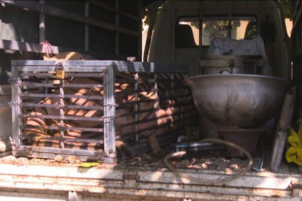 Hổ 240kg còn sống trên đường từ Nghệ An ra Quảng Ninh nấu cao - Ảnh 1.