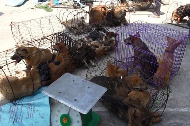 Chiếc hầm bí mật trong đường dây trộm hơn 100 tấn chó ở Thanh Hóa - Ảnh 1.