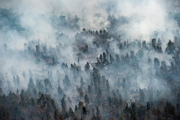 Cháy rừng Indonesia khiến các nước láng giềng nghẹt thở  - Ảnh 1.