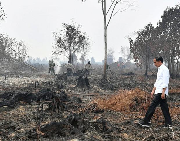 Cháy rừng Indonesia khiến các nước láng giềng nghẹt thở  - Ảnh 2.