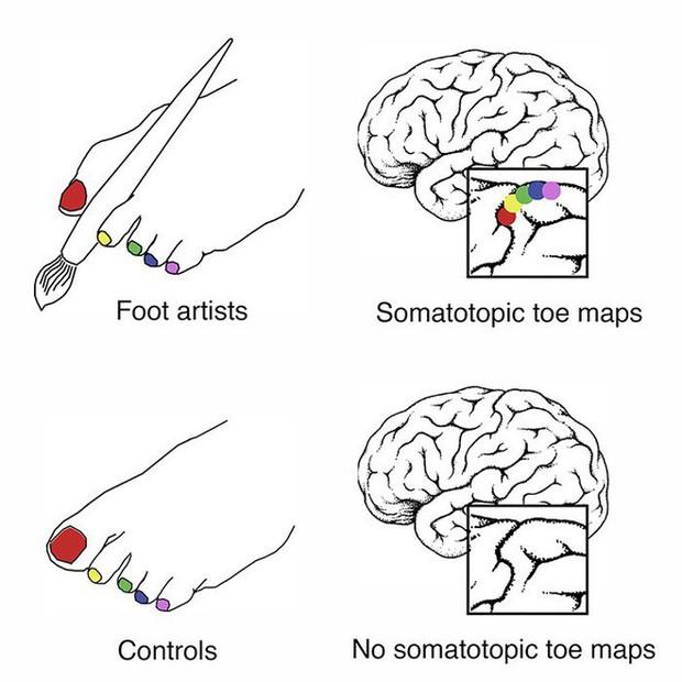 Não bộ của những họa sĩ không tay tiến hóa ngược để sử dụng bàn chân linh hoạt như linh trưởng leo trèo - Ảnh 2.