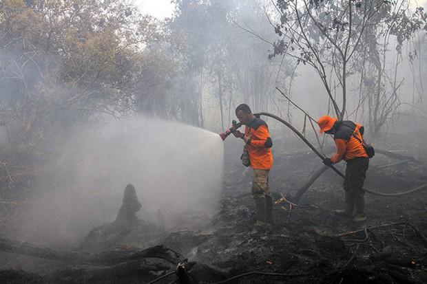 Cháy rừng Indonesia khiến các nước láng giềng nghẹt thở  - Ảnh 3.