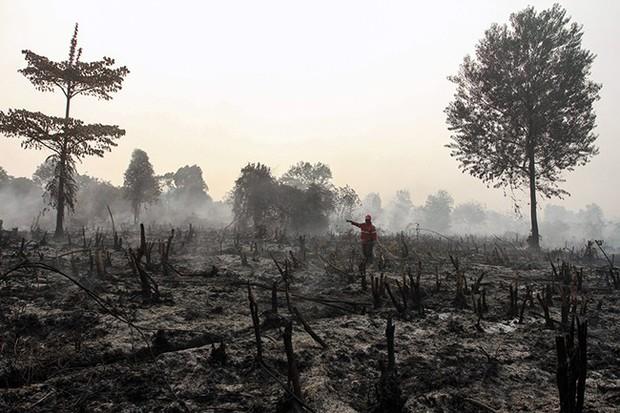 Cháy rừng Indonesia khiến các nước láng giềng nghẹt thở  - Ảnh 8.