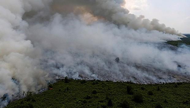 Cháy rừng Indonesia khiến các nước láng giềng nghẹt thở  - Ảnh 9.