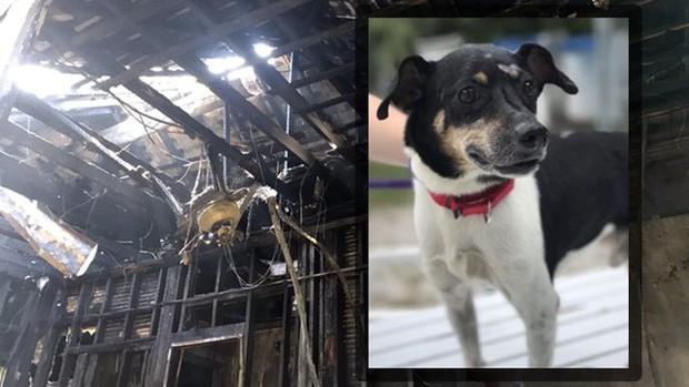 Chú chó nhỏ dũng cảm hy sinh tính mạng để đổi lấy mạng sống cho cả gia đình chủ trong cơn hỏa hoạn giữa đêm tối - Ảnh 1.