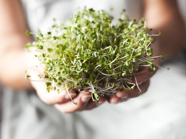 Nghiên cứu chứng minh: bông cải xanh chính là nguồn dưỡng chất tuyệt vời giúp đẩy lùi bệnh ung thư - Ảnh 2.