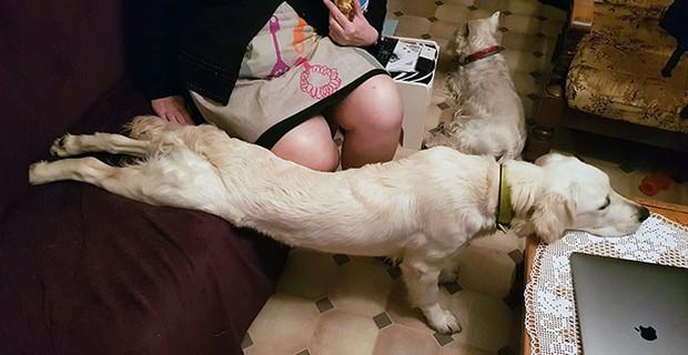 Loạt ảnh chó cưng khoe dáng ngủ bá đạo, không có dị nhất chỉ có dị hơn khiến người xem cười không ngậm được mồm - Ảnh 15.