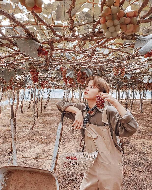 """Tháng 9 đổi gió """"săn nho"""" tại 2 khu vườn nổi tiếng nhất Ninh Thuận để lúc đi có hình sống ảo, lúc về có nho ăn! - Ảnh 13."""
