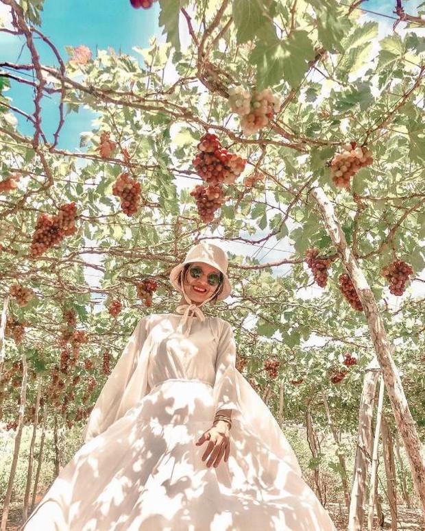 """Tháng 9 đổi gió """"săn nho"""" tại 2 khu vườn nổi tiếng nhất Ninh Thuận để lúc đi có hình sống ảo, lúc về có nho ăn! - Ảnh 16."""