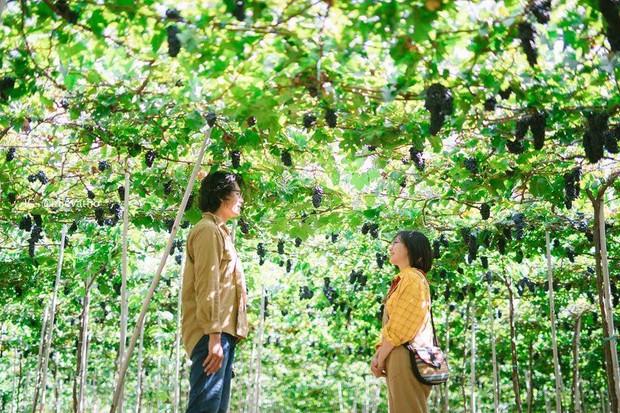 """Tháng 9 đổi gió """"săn nho"""" tại 2 khu vườn nổi tiếng nhất Ninh Thuận để lúc đi có hình sống ảo, lúc về có nho ăn! - Ảnh 6."""