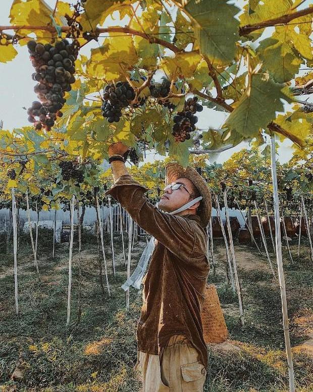 """Tháng 9 đổi gió """"săn nho"""" tại 2 khu vườn nổi tiếng nhất Ninh Thuận để lúc đi có hình sống ảo, lúc về có nho ăn! - Ảnh 7."""