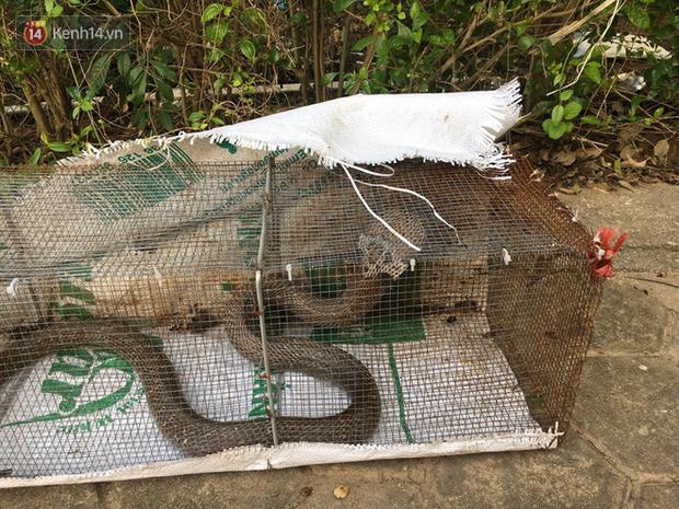 """Rắn bủa vây một chung cư ở Hà Nội, khu vui chơi bị """"bỏ hoang"""" vì người dân sợ rắn tấn công - Ảnh 11."""