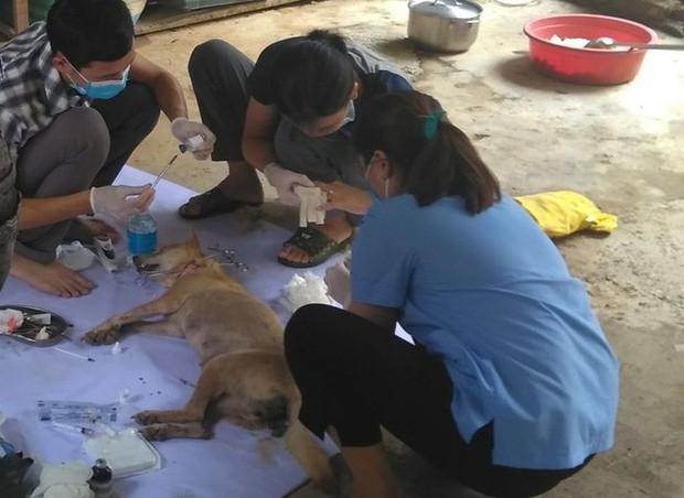 Vụ triệt phá băng nhóm trộm hơn 100 tấn chó: ACPA hỗ trợ chăm sóc chó bị thương - Ảnh 1.