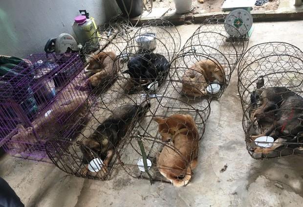 Vụ triệt phá băng nhóm trộm hơn 100 tấn chó: ACPA hỗ trợ chăm sóc chó bị thương - Ảnh 2.