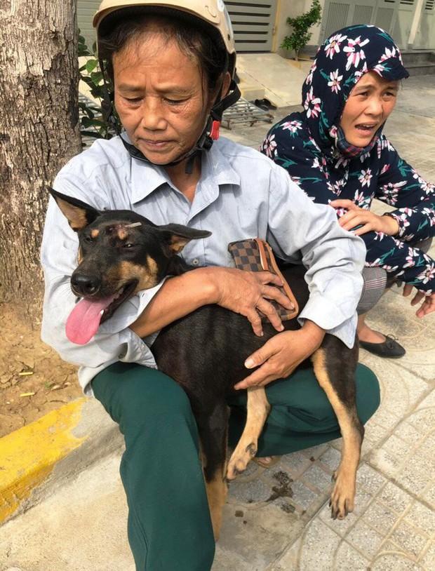 Vụ triệt phá băng nhóm trộm hơn 100 tấn chó: ACPA hỗ trợ chăm sóc chó bị thương - Ảnh 3.