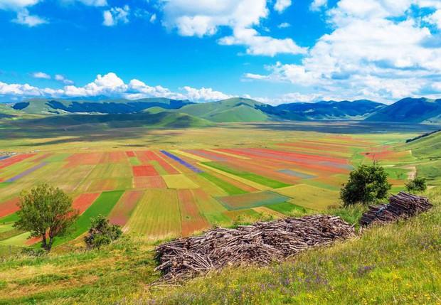 Mê mẩn vẻ đẹp của những cánh đồng hoa trên khắp thế giới - Ảnh 8.
