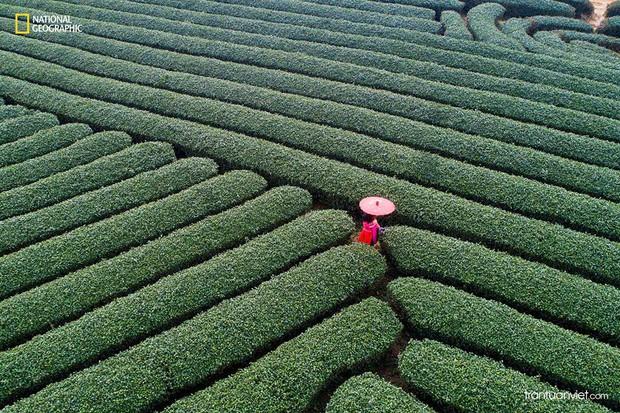 Được cả National Geographic vinh danh, loạt cảnh đẹp nhìn từ trên cao này là minh chứng cho câu nói: Việt Nam mình đẹp lắm! - Ảnh 18.