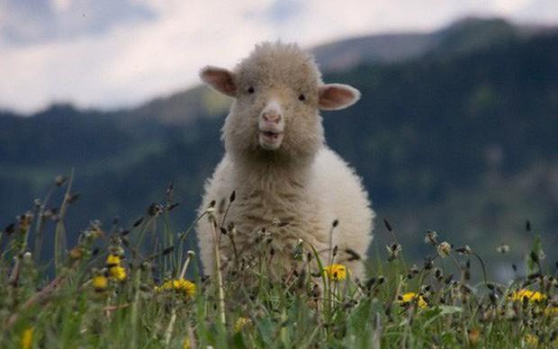 Chúng ta đang bị Facebook, Google biến thành những chú cừu non như thế nào? - Ảnh 1.