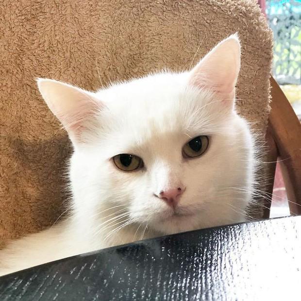 """Chỉ vì một phút """"cà khịa"""", chú mèo nhát gừng bất chợt hoá sao Instagram với hơn 700K follow - Ảnh 3."""