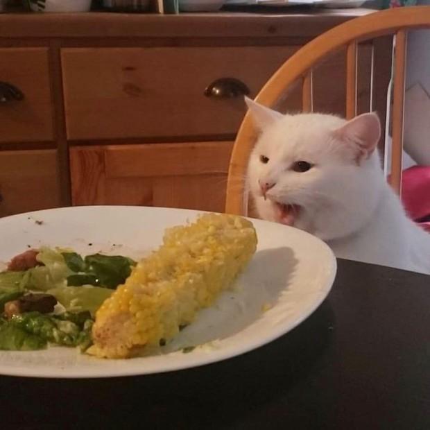 """Chỉ vì một phút """"cà khịa"""", chú mèo nhát gừng bất chợt hoá sao Instagram với hơn 700K follow - Ảnh 5."""