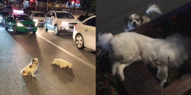 Hình ảnh chú chó trung thành đứng canh trước xác người bạn suốt 3 tiếng đồng hồ khiến dân tình không kìm được nước mắt  - Ảnh 1.
