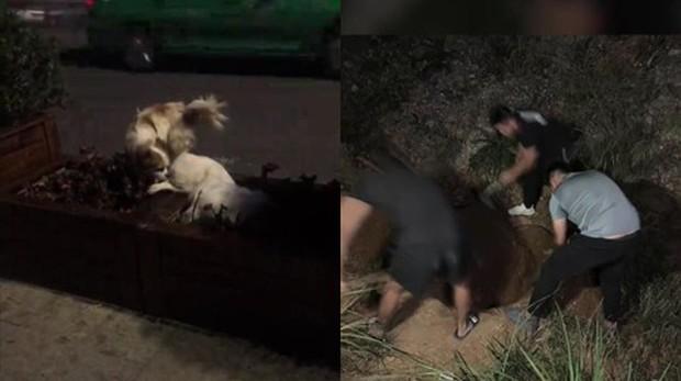 Hình ảnh chú chó trung thành đứng canh trước xác người bạn suốt 3 tiếng đồng hồ khiến dân tình không kìm được nước mắt  - Ảnh 3.