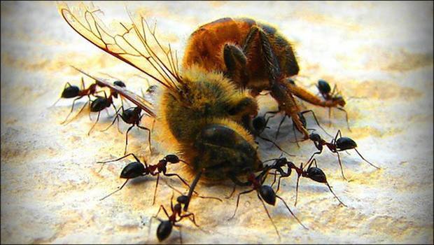 Nếu loài ong tuyệt chủng, rất có thể nhân loại chỉ tồn tại được thêm 4 năm - Ảnh 3.