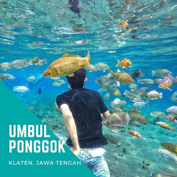 """Chuyện lạ có thật: Cái """"ao làng"""" nhưng chất lượng vươn lên hàng quốc tế, du khách đến Indonesia phải đua nhau tìm đến sống ảo - Ảnh 1."""