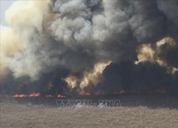 Cháy rừng thiêu chết hàng triệu động vật hoang dã tại Bolivia - Ảnh 1.