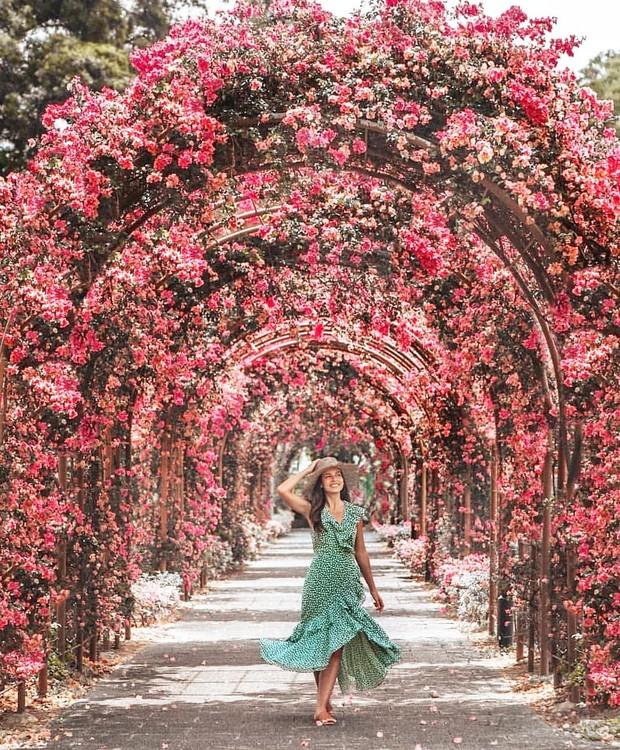 Con đường hoa ảo diệu ở Singapore được các travel blogger lăng xê nhiệt tình thực chất là một cái... nghĩa trang! - Ảnh 8.