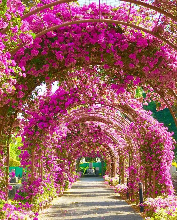 Con đường hoa ảo diệu ở Singapore được các travel blogger lăng xê nhiệt tình thực chất là một cái... nghĩa trang! - Ảnh 7.