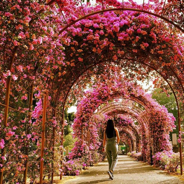 Con đường hoa ảo diệu ở Singapore được các travel blogger lăng xê nhiệt tình thực chất là một cái... nghĩa trang! - Ảnh 19.