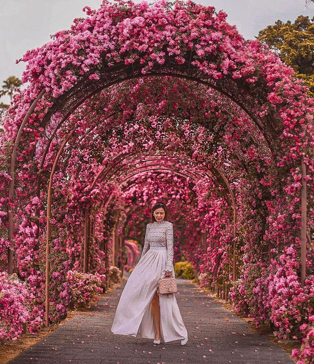 Con đường hoa ảo diệu ở Singapore được các travel blogger lăng xê nhiệt tình thực chất là một cái... nghĩa trang! - Ảnh 5.