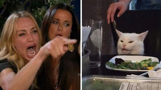 Internet lại rần rần vì boss mèo chuyên tạo dáng chụp ảnh đậm chất hiphop siêu ngầu, mà toàn là động tác khó chứ đừng đùa - Ảnh 1.