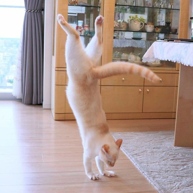 Internet lại rần rần vì boss mèo chuyên tạo dáng chụp ảnh đậm chất hiphop siêu ngầu, mà toàn là động tác khó chứ đừng đùa - Ảnh 2.