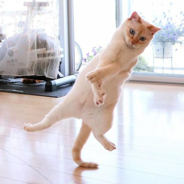 Internet lại rần rần vì boss mèo chuyên tạo dáng chụp ảnh đậm chất hiphop siêu ngầu, mà toàn là động tác khó chứ đừng đùa - Ảnh 13.
