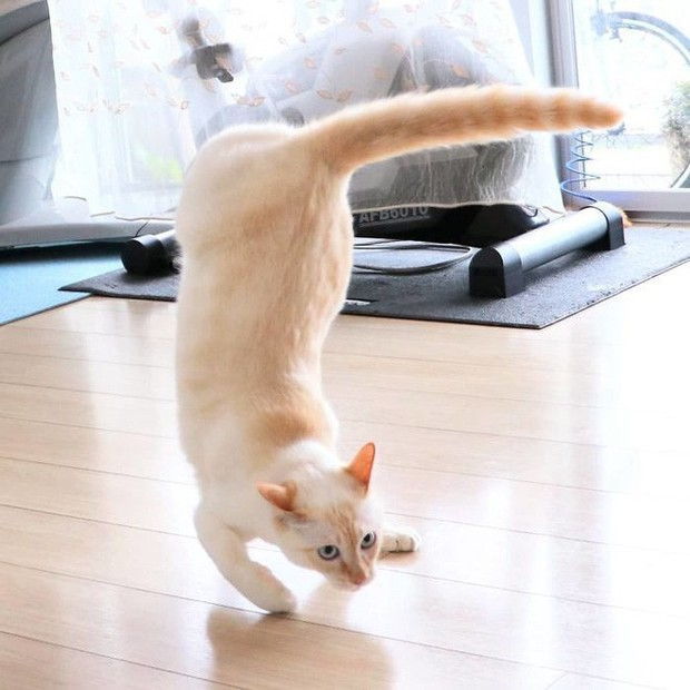 Internet lại rần rần vì boss mèo chuyên tạo dáng chụp ảnh đậm chất hiphop siêu ngầu, mà toàn là động tác khó chứ đừng đùa - Ảnh 15.