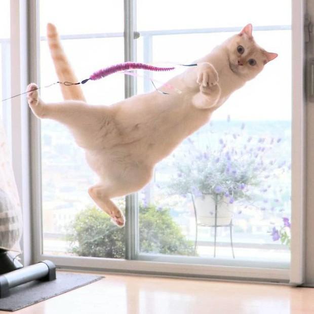 Internet lại rần rần vì boss mèo chuyên tạo dáng chụp ảnh đậm chất hiphop siêu ngầu, mà toàn là động tác khó chứ đừng đùa - Ảnh 16.