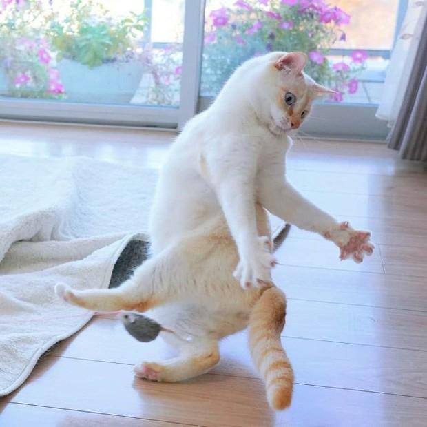 Internet lại rần rần vì boss mèo chuyên tạo dáng chụp ảnh đậm chất hiphop siêu ngầu, mà toàn là động tác khó chứ đừng đùa - Ảnh 4.
