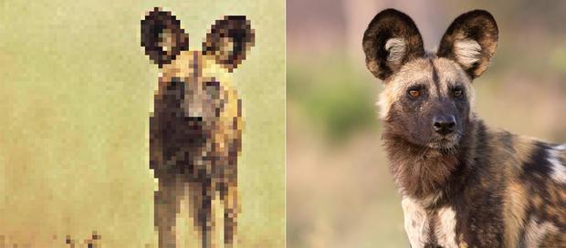 21 bức ảnh động vật hoang dã bị làm mờ: Tưởng ảnh hỏng nhưng lại mang thông điệp ý nghĩa phía sau khiến chúng ta phải bất ngờ - Ảnh 6.