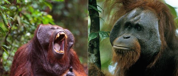 21 bức ảnh động vật hoang dã bị làm mờ: Tưởng ảnh hỏng nhưng lại mang thông điệp ý nghĩa phía sau khiến chúng ta phải bất ngờ - Ảnh 17.