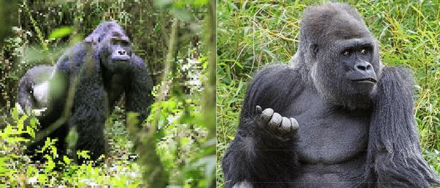 21 bức ảnh động vật hoang dã bị làm mờ: Tưởng ảnh hỏng nhưng lại mang thông điệp ý nghĩa phía sau khiến chúng ta phải bất ngờ - Ảnh 7.