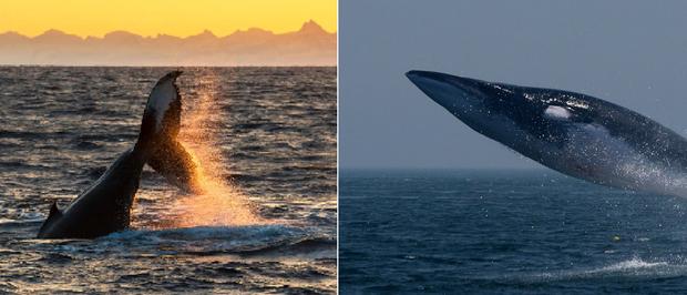 21 bức ảnh động vật hoang dã bị làm mờ: Tưởng ảnh hỏng nhưng lại mang thông điệp ý nghĩa phía sau khiến chúng ta phải bất ngờ - Ảnh 3.