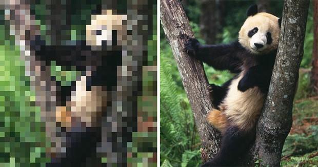 21 bức ảnh động vật hoang dã bị làm mờ: Tưởng ảnh hỏng nhưng lại mang thông điệp ý nghĩa phía sau khiến chúng ta phải bất ngờ - Ảnh 1.