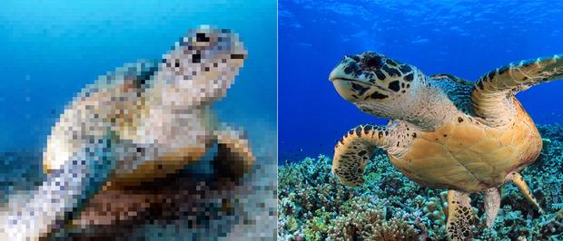 21 bức ảnh động vật hoang dã bị làm mờ: Tưởng ảnh hỏng nhưng lại mang thông điệp ý nghĩa phía sau khiến chúng ta phải bất ngờ - Ảnh 19.